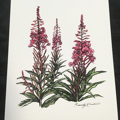 Brandy Klindworth Fireweed poster