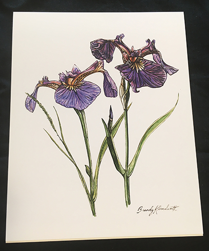 Brandy Klindworth Iris Poster
