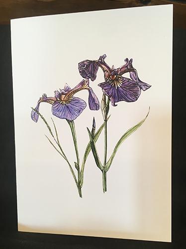 Brandy Klindworth Iris cards