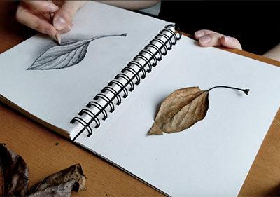 Nature Journaling Series for Kids